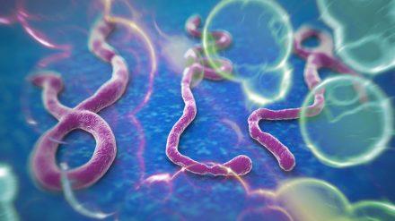 ¿Qué hay de nuevo sobre el ébola?
