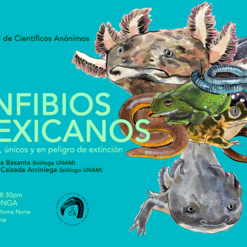 Científicos Anónimos #024: Anfibios mexicanos