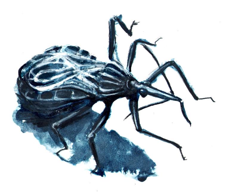 Ciencia, arte y animales raros