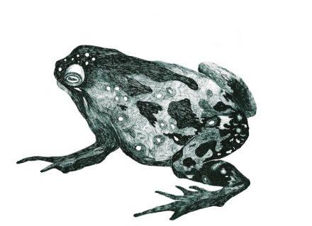 El hombre y la rana