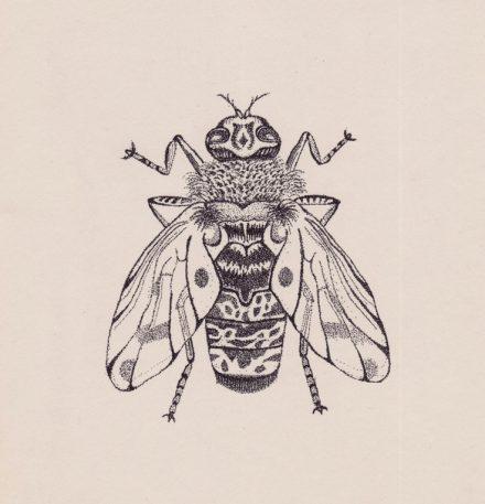 El señor de las moscas