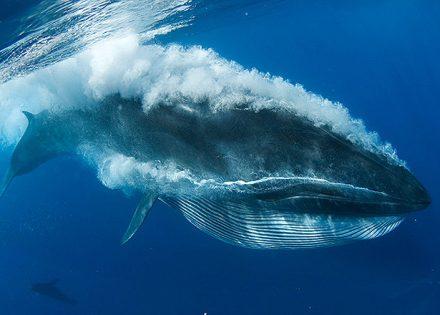 En busca de los gigantes del mar: Pamela Martinez Loustalot