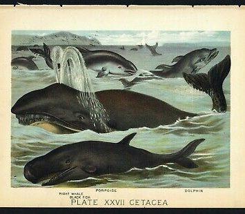 EL CIRCO DE LOS CETÁCEOS, sobre la cuestionable práctica de confinar mamíferos marinos